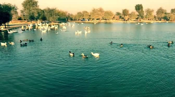 lakes-of-dubai-4