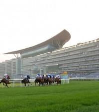 دبي تستضيف السباق الثامن من سباقات الخيل في ميدان 2015 / 2016