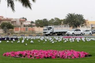 أجمل الصور الملتقطة في الإمارات خلال الأجواء الشتوية 2017